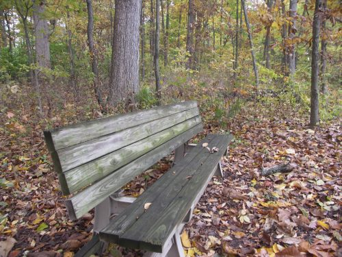 Bench on trail with fallen leaves